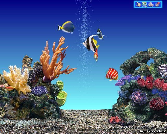 Аквариумные рыбки название категорий